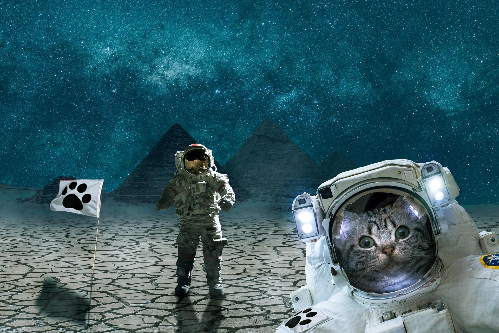astronaut cat conquers space