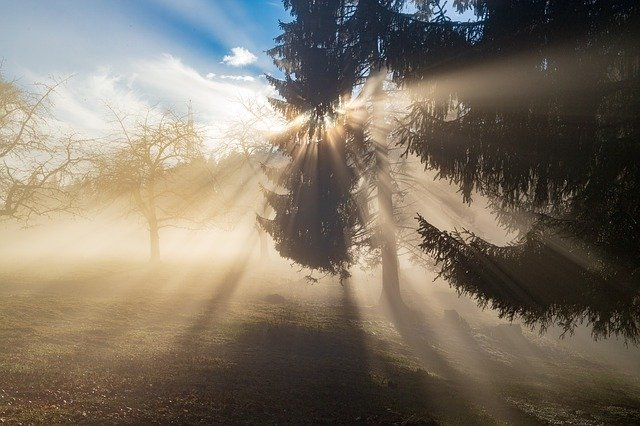 rays of the sun through the mist in a forest
