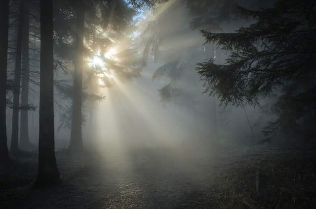 rays of the sun through a dark forest